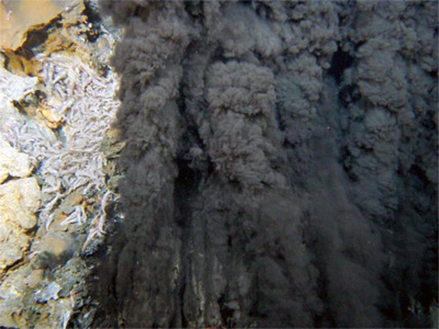 Figure 3 : Site hydrothermal TAG – Atlantique – 3600 m – T°: 360°C – pH : 3.5. campagne Exomar.
